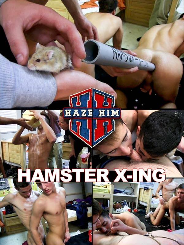 Hamster X-ing at HazeHim.com