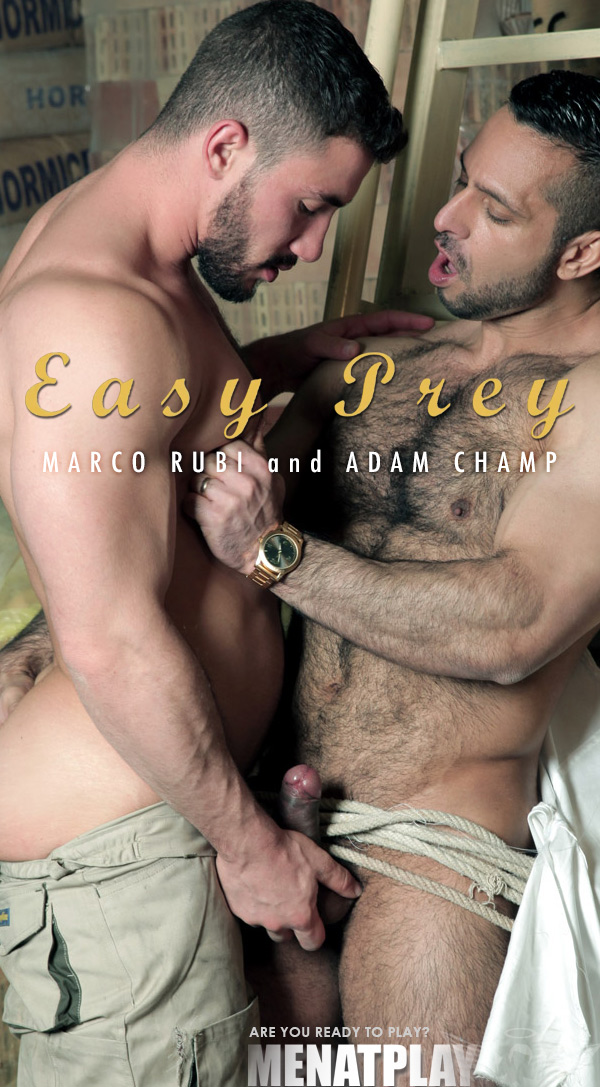 Easy Prey (Adam Champ Fucks Marco Rubi) on MenAtPlay
